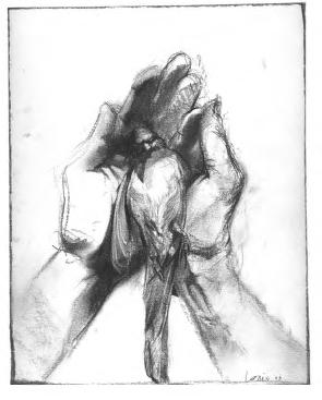dead bird in hands illustration for none